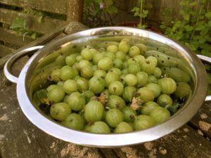 Gooseberry jam1