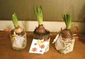Hyacinth7