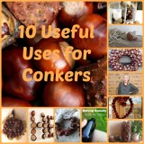 10 Useful Uses for Conkers…